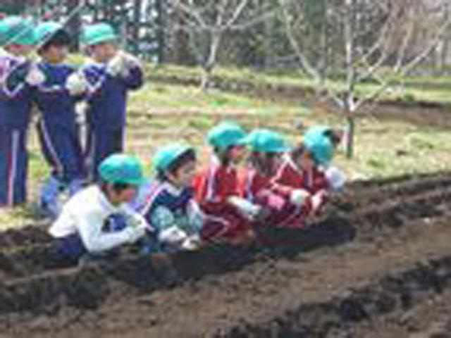 毎年七飯町にある国の華農園で豆、いも、とうきびの種まきから収穫までの体験を行っています。