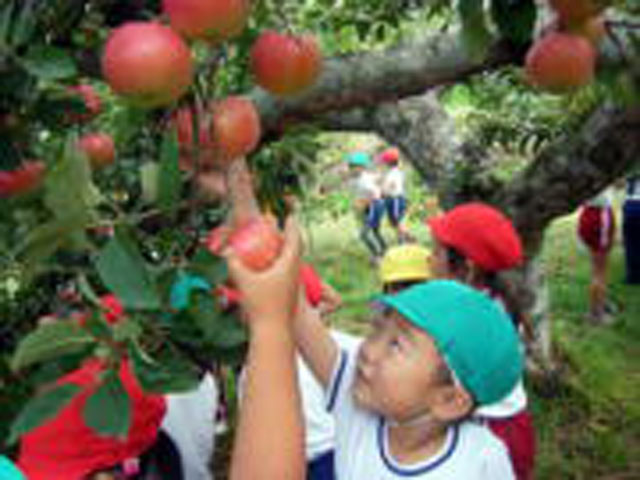リンゴもぎ体験